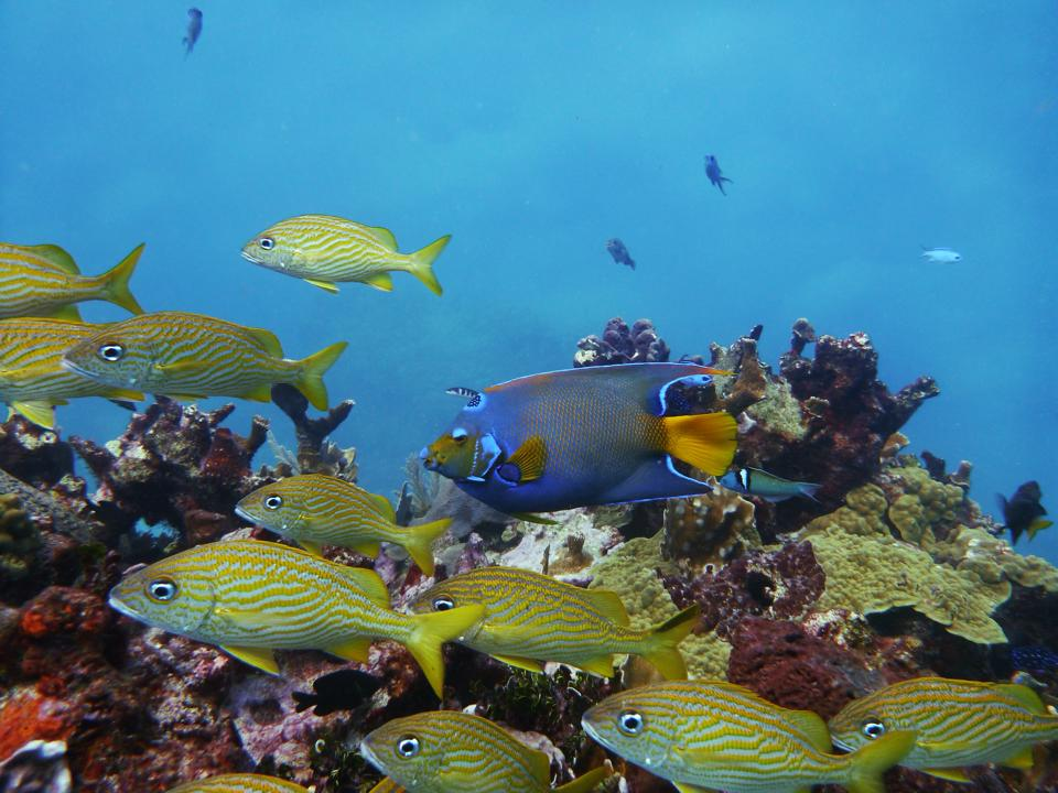 Scuba Diving off Isla Mujeres