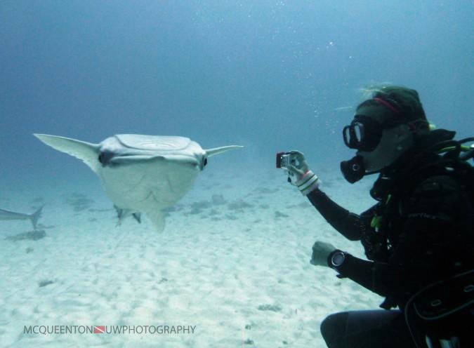 Remora photobombing, Bull Shark Dive. c/ MC Queenton.